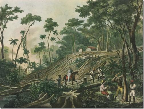 Derrubada de uma Floresta (Defrichement d'une Forêt), 1835, Johann Moritz Rugendas